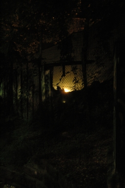 visione notturna.Milano.2010
